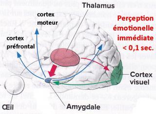 http://lancien.cowblog.fr/images/Cerveau2/memorisation1.jpg