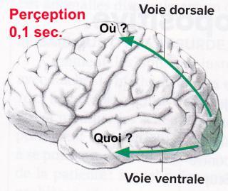 http://lancien.cowblog.fr/images/Cerveau2/memorisation2.jpg