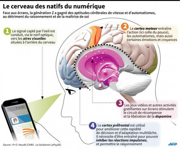 http://lancien.cowblog.fr/images/Cerveau3/13695770.jpg