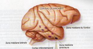 http://lancien.cowblog.fr/images/Cerveau3/Numeriser1-copie-1.jpg