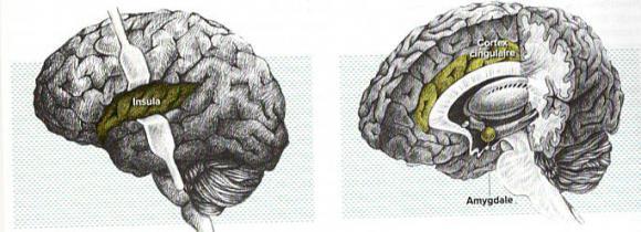 http://lancien.cowblog.fr/images/Cerveau3/Numeriser1-copie-2.jpg