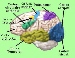 http://lancien.cowblog.fr/images/Cerveau3/cerveauhypnose.jpg
