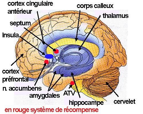 http://lancien.cowblog.fr/images/Cerveau3/intelligence2.jpg