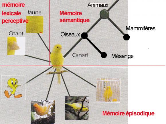 http://lancien.cowblog.fr/images/Cerveau3/memoirecanari.jpg