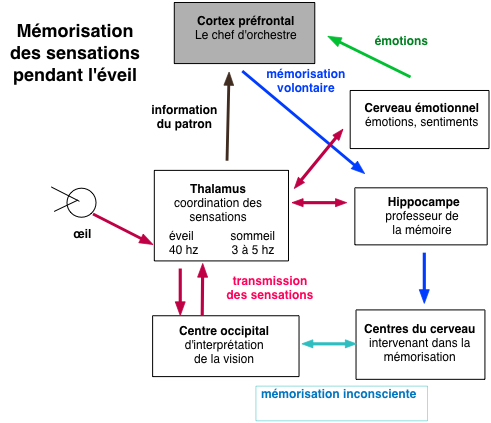 http://lancien.cowblog.fr/images/Cerveau3/memorisationeveil.jpg