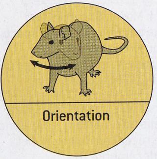 http://lancien.cowblog.fr/images/Cerveau3/orientation.jpg