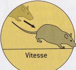 http://lancien.cowblog.fr/images/Cerveau3/vitesse.jpg