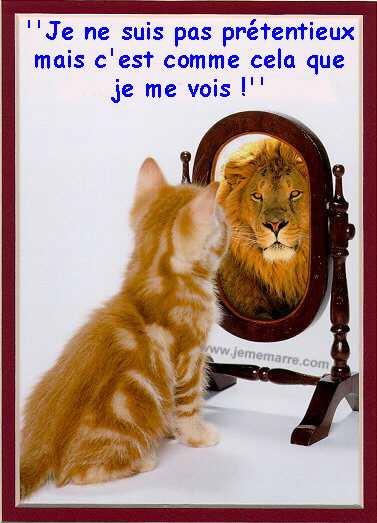 http://lancien.cowblog.fr/images/Chats1/2745281.jpg