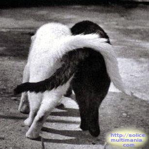 http://lancien.cowblog.fr/images/Chats1/chatscopains.jpg