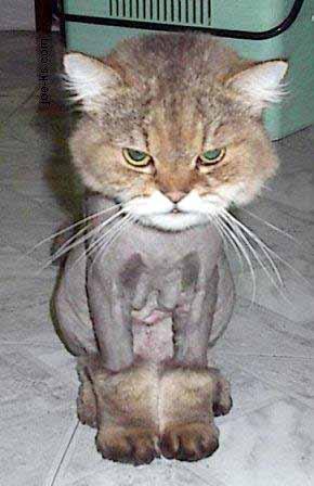 http://lancien.cowblog.fr/images/Chats1/chattondu.jpg
