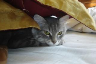 http://lancien.cowblog.fr/images/Chats2/autresanimauxdecompagniebeziersfrance11336066601196436.jpg