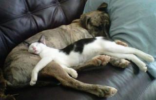 http://lancien.cowblog.fr/images/Chats2/catssleepinginweirdways64023.jpg