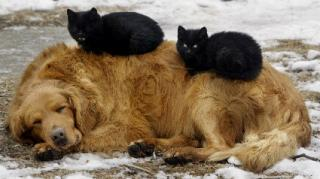 http://lancien.cowblog.fr/images/Chats2/catssleepingwithdogs1.jpg