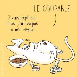 http://lancien.cowblog.fr/images/Chats3/64.jpg