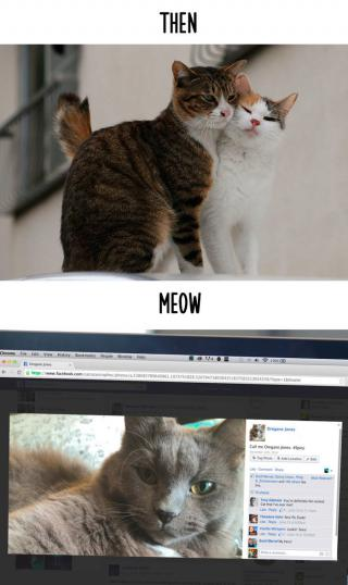 http://lancien.cowblog.fr/images/Chats3/Catsthennowfunnytechnologychangelife155716342bb48847001.jpg