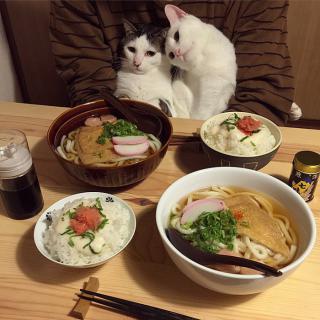 http://lancien.cowblog.fr/images/Chats3/catswatchingpeopleeatnaomiuno13.jpg