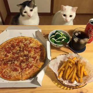 http://lancien.cowblog.fr/images/Chats3/catswatchingpeopleeatnaomiuno24.jpg