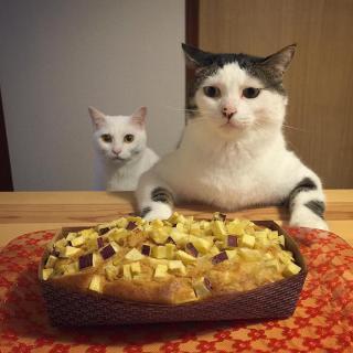 http://lancien.cowblog.fr/images/Chats3/catswatchingpeopleeatnaomiuno6.jpg