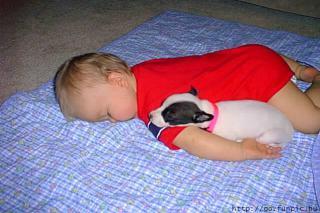 http://lancien.cowblog.fr/images/Chiens/zqgitSleepingDogwithBaby.jpg