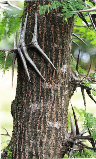 http://lancien.cowblog.fr/images/ClimatEnergie/arbrecornedetaureau.jpg