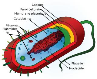 http://lancien.cowblog.fr/images/ClimatEnergie/bacterie.png