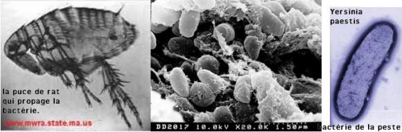http://lancien.cowblog.fr/images/ClimatEnergie/bacteriepeste.jpg