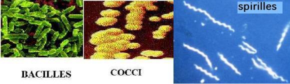 http://lancien.cowblog.fr/images/ClimatEnergie/bacteriesformes.jpg