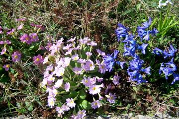http://lancien.cowblog.fr/images/Fleurs1/1001072.jpg