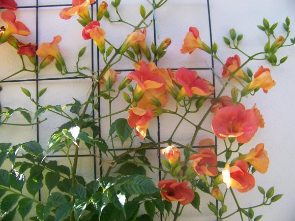 http://lancien.cowblog.fr/images/Fleurs1/1002940.jpg