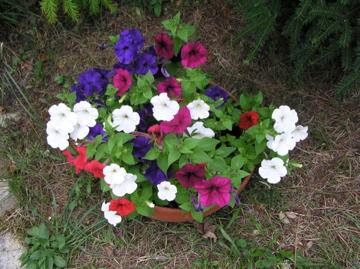 http://lancien.cowblog.fr/images/Fleurs1/P1010048.jpg