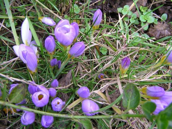 http://lancien.cowblog.fr/images/Fleurs1/P1130049.jpg