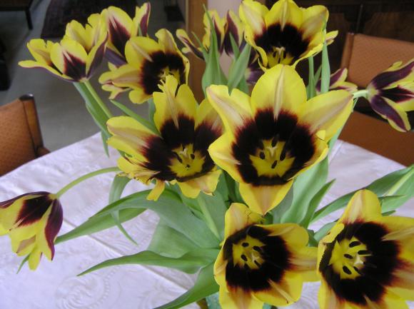 http://lancien.cowblog.fr/images/Fleurs1/P3040155.jpg