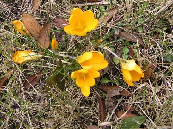 http://lancien.cowblog.fr/images/Fleurs1/P3040157-copie-1.jpg