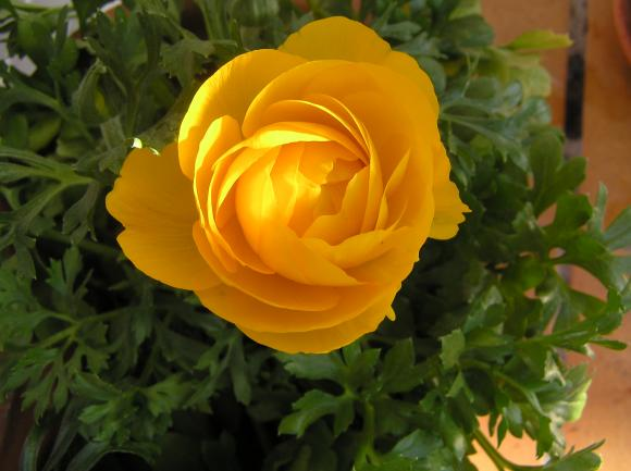 http://lancien.cowblog.fr/images/Fleurs1/P3280216.jpg