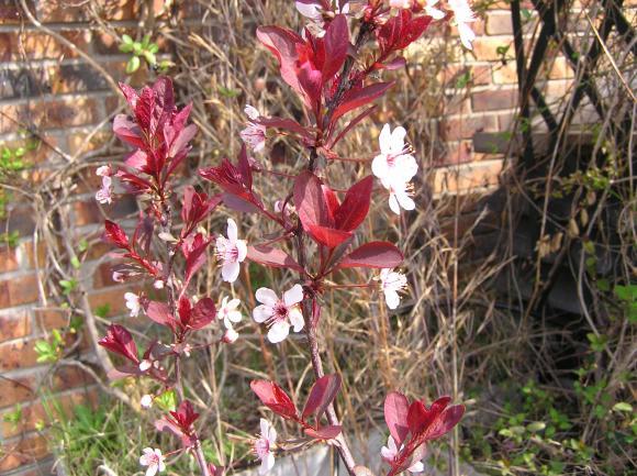 http://lancien.cowblog.fr/images/Fleurs1/P3310098.jpg