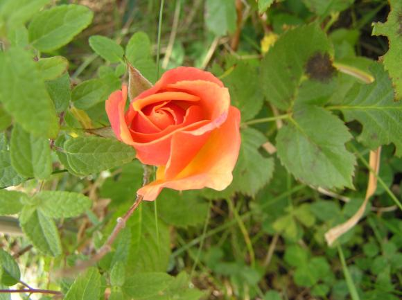 http://lancien.cowblog.fr/images/Fleurs1/P5190042.jpg