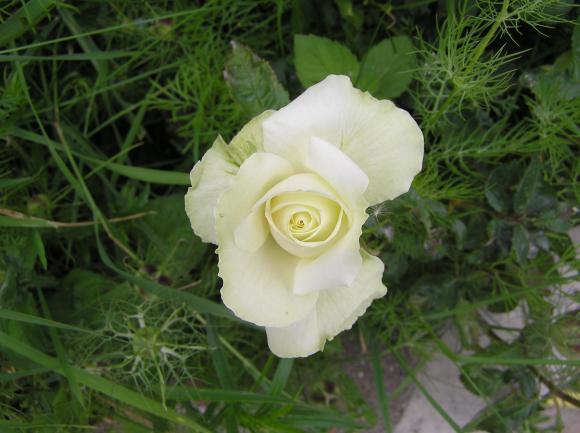 http://lancien.cowblog.fr/images/Fleurs1/P6140222.jpg
