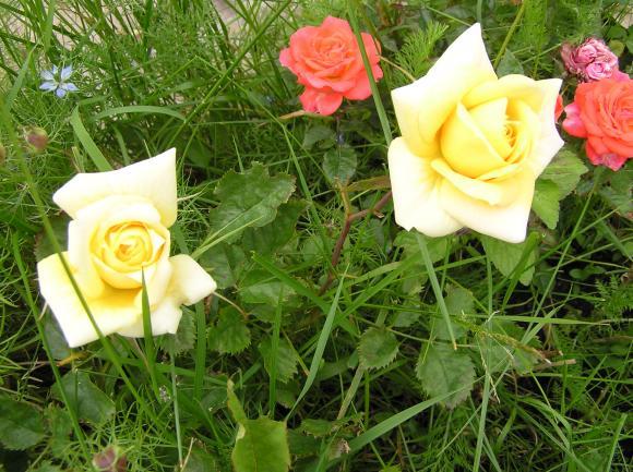 http://lancien.cowblog.fr/images/Fleurs1/P6140223-copie-1.jpg