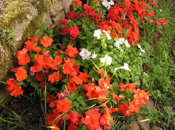 http://lancien.cowblog.fr/images/Fleurs1/P8100296.jpg