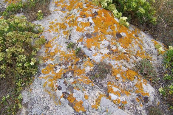 http://lancien.cowblog.fr/images/Fleurs3/1001459.jpg