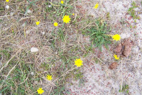 http://lancien.cowblog.fr/images/Fleurs3/1001469.jpg