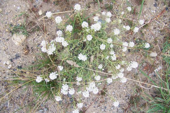 http://lancien.cowblog.fr/images/Fleurs3/1001470.jpg