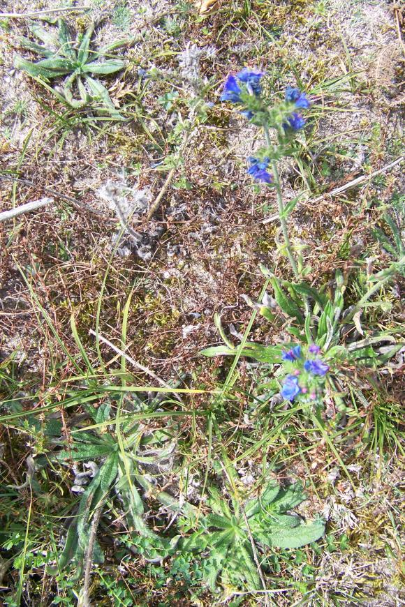 http://lancien.cowblog.fr/images/Fleurs3/1001502.jpg