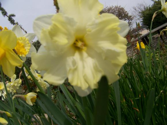 http://lancien.cowblog.fr/images/Fleurs3/1001829.jpg