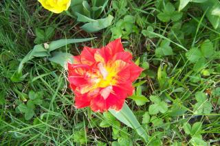 http://lancien.cowblog.fr/images/Fleurs3/1003744.jpg