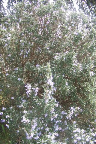 http://lancien.cowblog.fr/images/Fleurs3/1003754.jpg