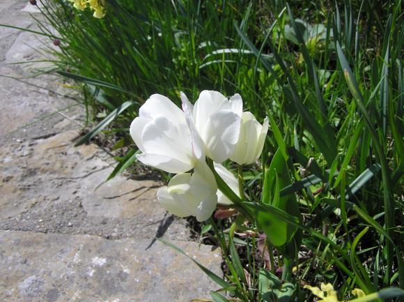 http://lancien.cowblog.fr/images/Fleurs3/P1010114.jpg