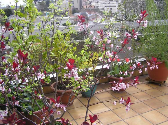 http://lancien.cowblog.fr/images/Fleurs3/P4170030-copie-1.jpg
