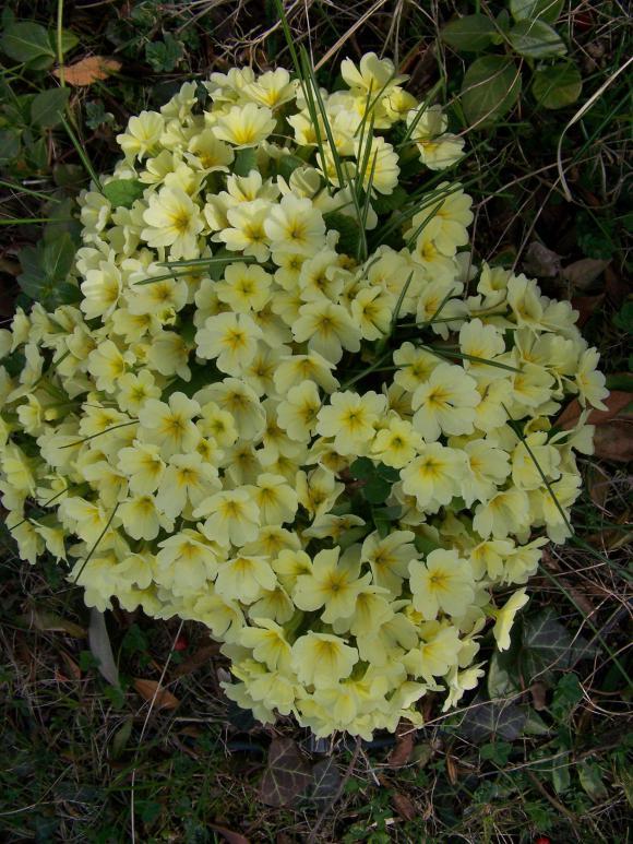 http://lancien.cowblog.fr/images/Fleurs4/1001748-copie-1.jpg