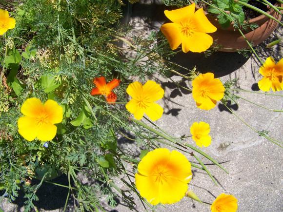 http://lancien.cowblog.fr/images/Fleurs4/1002069.jpg